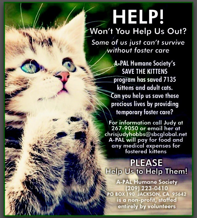 Cat with a Cause! A-Pal Humane Society