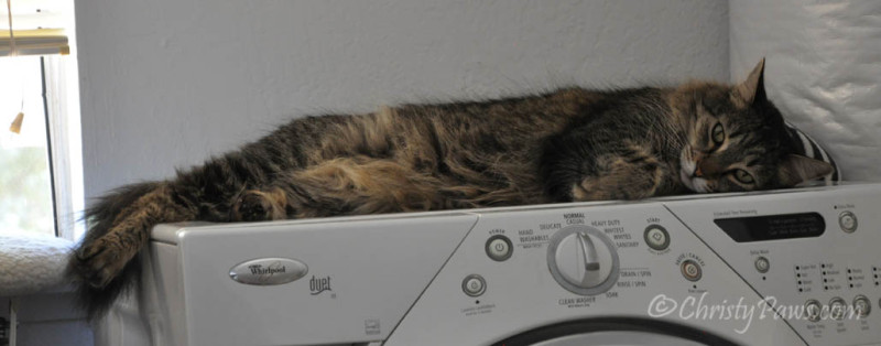 Echo napped on the cool washing machine