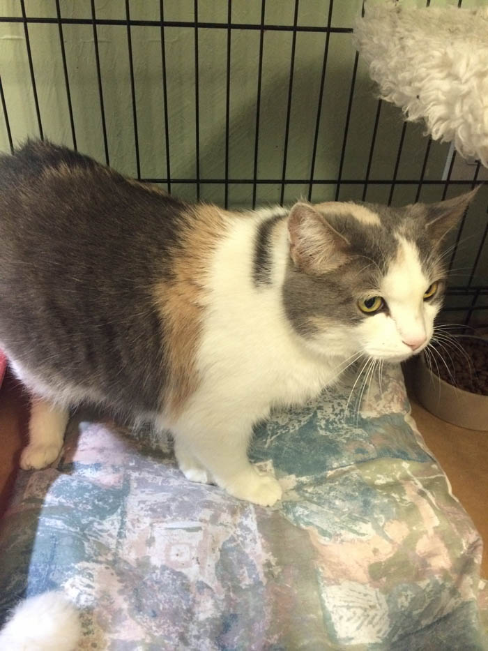 Friday's Featured Feline: Phoebe