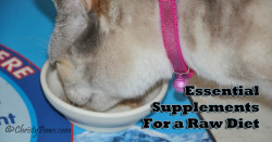 Essential raw food supplements for cats