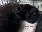 Friday's Featured Feline: Spookie