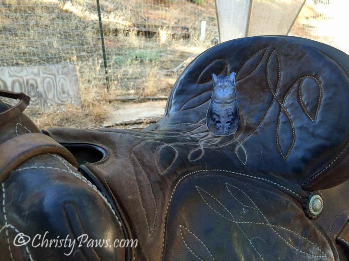 Ali Saddle 8515_108