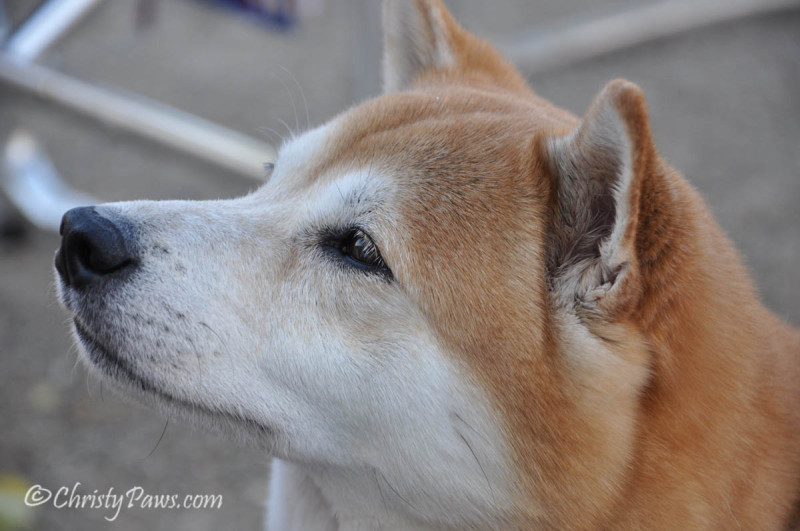 Saying Goodbye to a Pet -- A Tribute to Asia