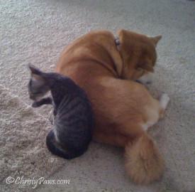 Asia with foster kitten Ollie