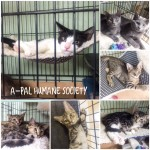 6,000 Words about Fabulous Felines Available for Adoption