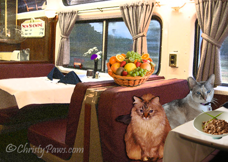 "Lionesses on the Prowl in ""Train Trouble"" - Flat Traveling Cats - dining car"