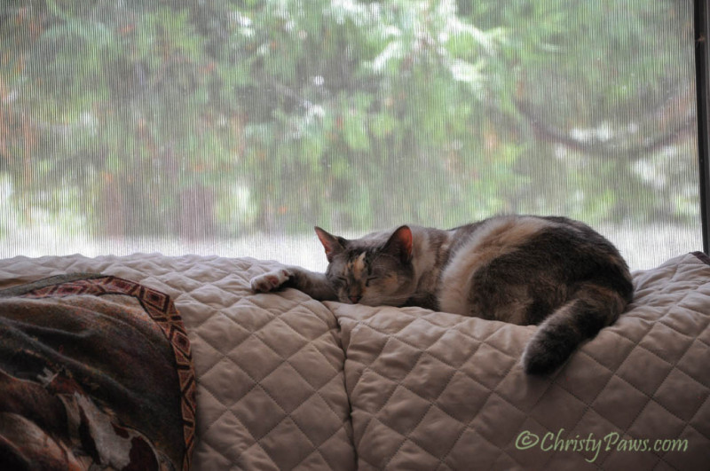 Caturday Art: Dreaming of Traveling with Izzy and Tristy - original  … <a href=