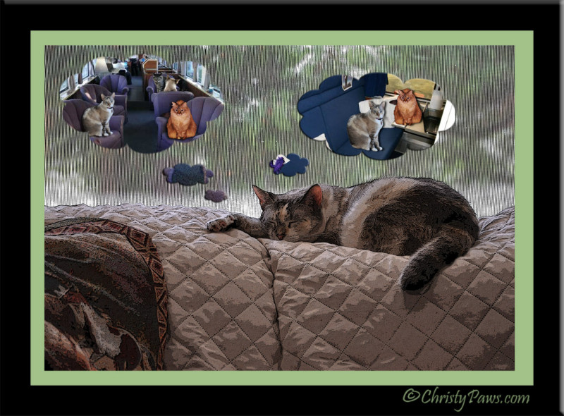 Caturday Art: Dreaming of Traveling with Izzy and Tristy