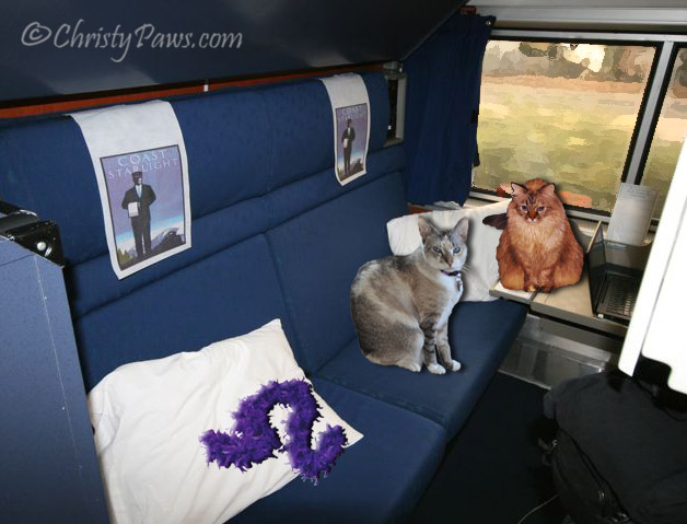 "Lionesses on the Prowl in ""Train Trouble"" - Flat Traveling Cats - in the bedroom"