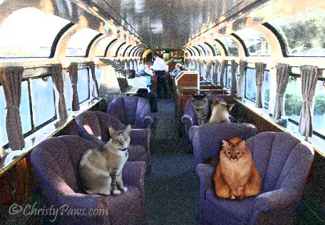 "Lionesses on the Prowl in ""Train Trouble"" - Flat Traveling Cats - parlor car"