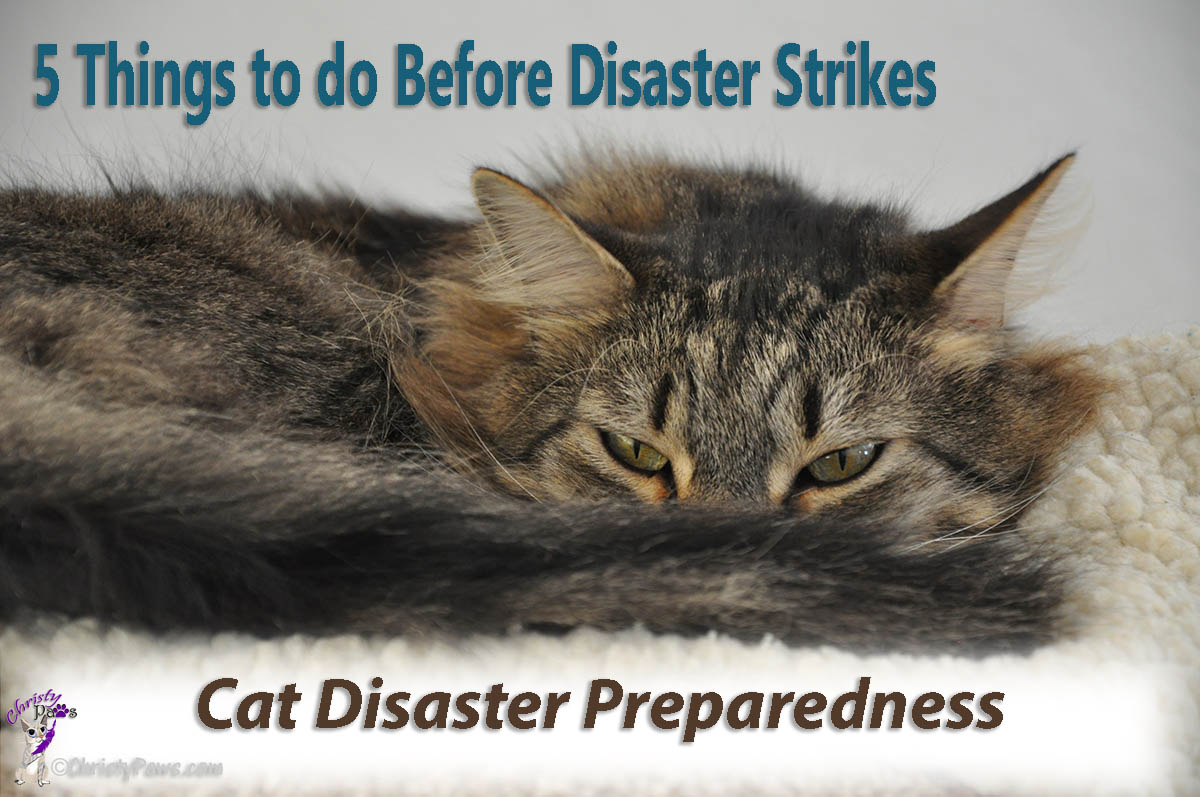 5 Things to do Before Disaster Strikes -- Cat Disaster Preparedness