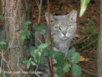 National Feral Cat Day 2015 -- The Evolution of the Cat Revolution