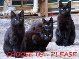 Black cat adoption, choose us, National Black Cat Day