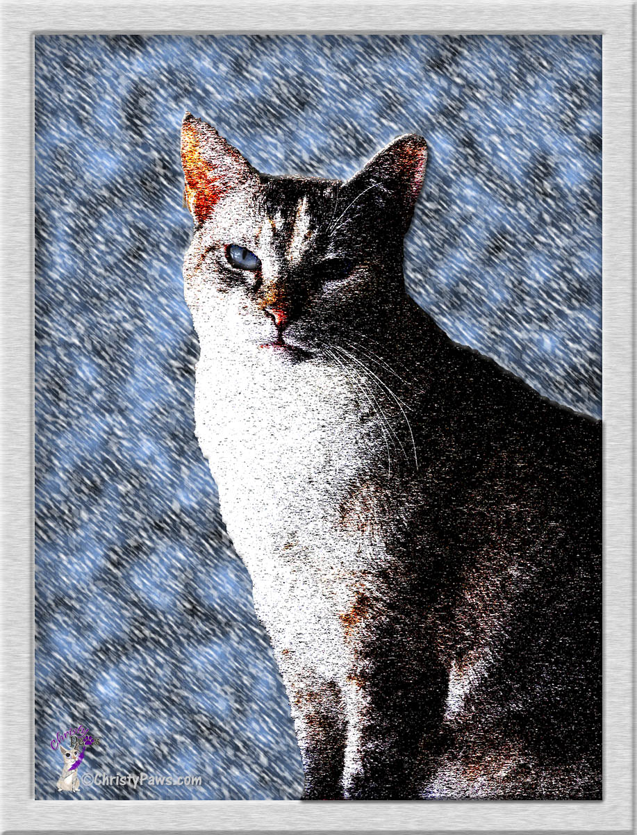 Caturday Art: Blizzard