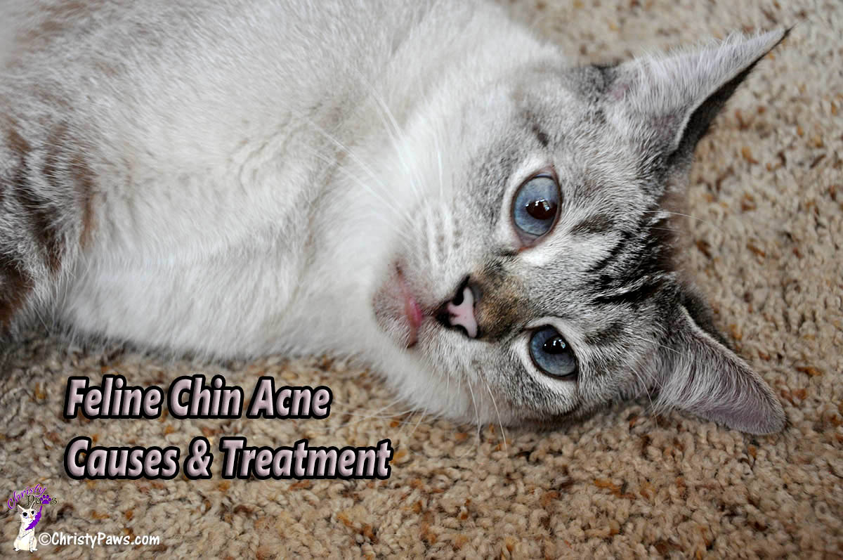 What S That On Your Chin Ocean Feline Chin Acne