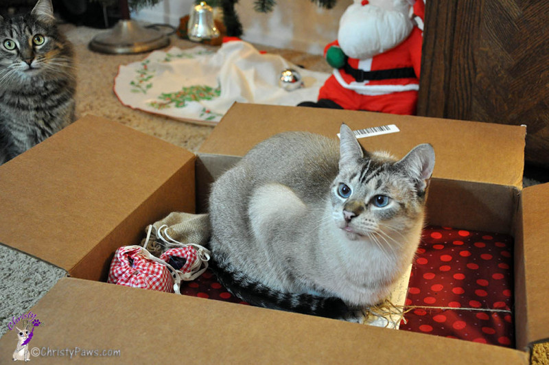 Our Secret Paws Finally Revealed -- Ocean in box