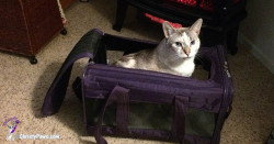 Christy in her carrier