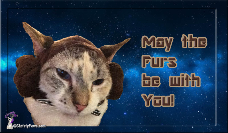 Caturday Art: May the Furs be with You