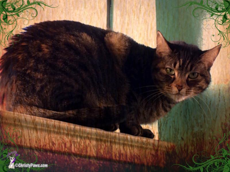 pet sitting client art photo SW