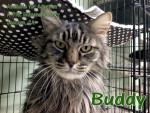 Adopt Buddy -- A-PAL Humane Society