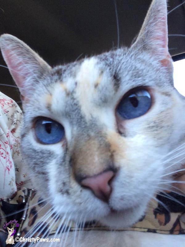 Christy selfie - Sunday Selfies Sneak Peek