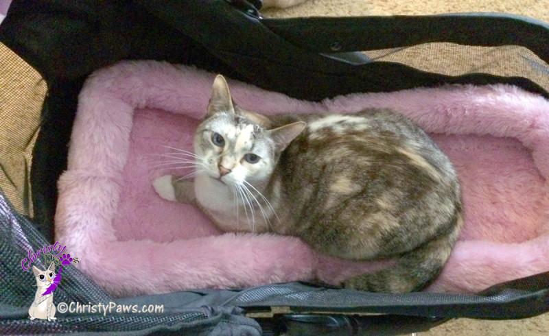 Christy in her new stroller