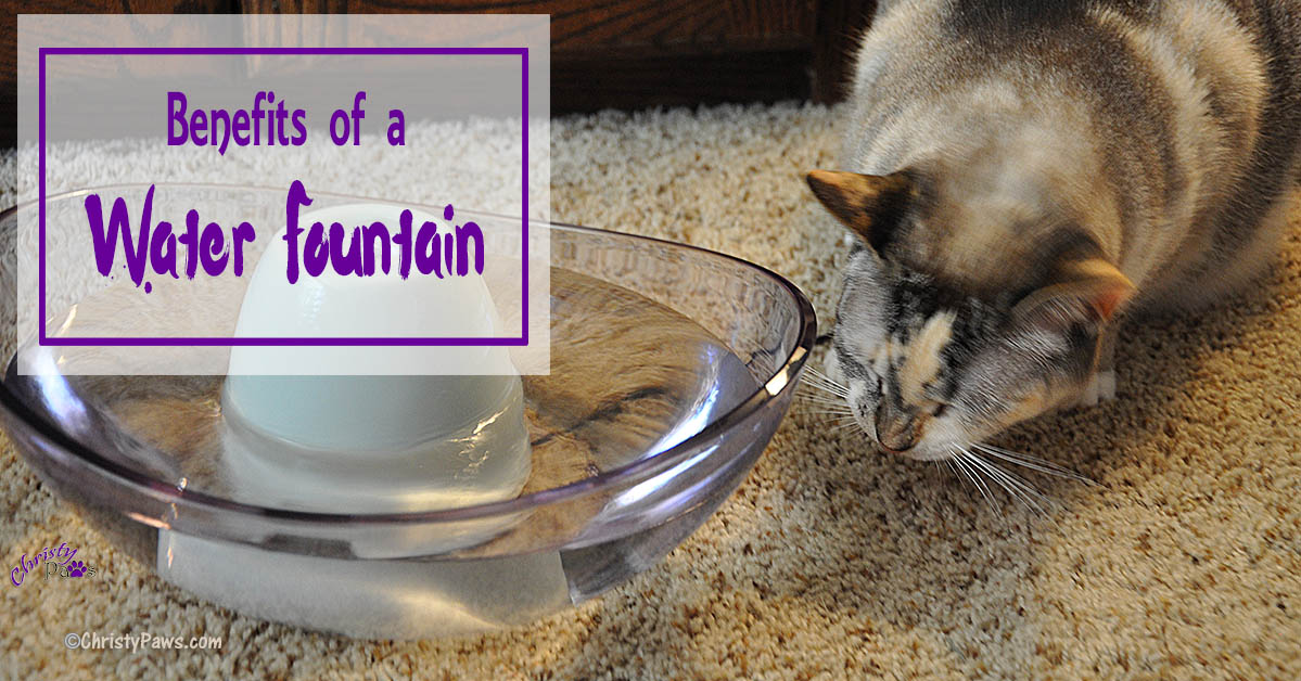 Benefits of a Pet Water Fountain