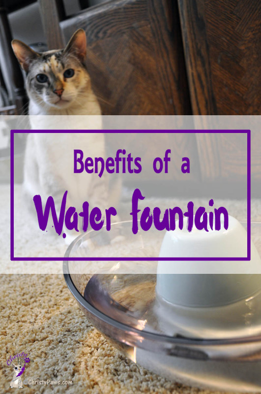 cat next to water fountain