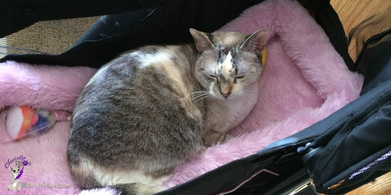 Dozing in my stroller - throw back - BlogPaws and Spring are Inspiring Us to Get Outdoors