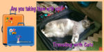 Best Tips for Traveling with Cats -- A Roundup
