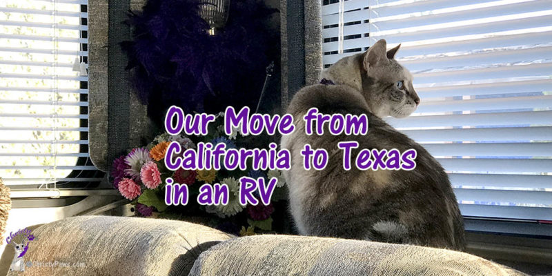 cat looking out window during RV trip with text overlay: Our move from California to Texas in an RV