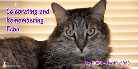 long haired tabby cat with text overlay: Celebrating and Remembering Echo May 2009 - May 15, 2020