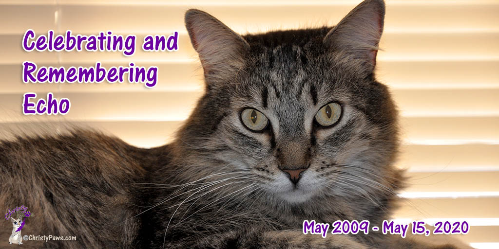 Celebrating and Remembering Echo -- May 2009 - May 2020