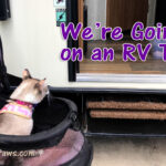 We're Going on an RV Trip!