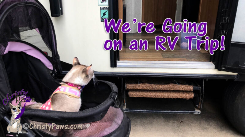 cat in stroller looking into trailer with text overlay: We're going on an RV trip!
